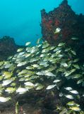 Fish on a reef Stock Photos