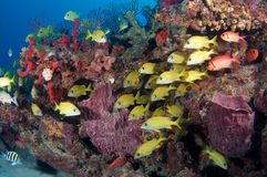 Fish on a reef Royalty Free Stock Images