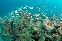Fish on a reef Stock Photography