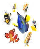 Fish, reef fish, marine fish party isolated on whi