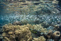 Fish and Reef in Shallows of Tropical Pacific Ocean Stock Images