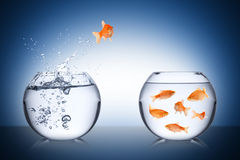 Fish return concept Stock Photos