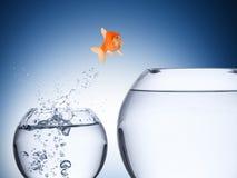 Fish rise concept Stock Image