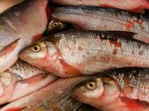 Fish river Royalty Free Stock Photo