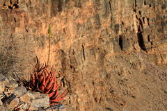 The Fish River Canyon in Namibia Royalty Free Stock Images