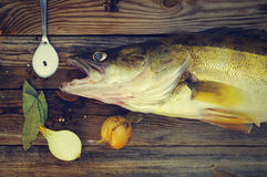 Fish a river pike perch on a wooden board with salt, bay leaf, onions, pepper. Royalty Free Stock Photography