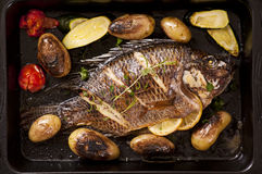 Fish roasted. Tilapia roasted with vegetable as close up royalty free stock image