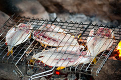 Fish is roasted on fire Royalty Free Stock Images