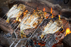 Fish roasting on fire Royalty Free Stock Photography