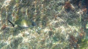 Fish on the rocks 3 Royalty Free Stock Photos