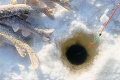 Fish and rod on the Ice close to hole while winter fishing Stock Photos