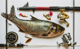 Fish with rods and tackle Royalty Free Stock Photo