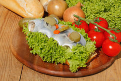 Fish rolls with sour herring, pickled herring Stock Photos