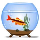 Fish in a round aquarium. Vector illustration of a fishbowl. Fish in a round aquarium with water plants Stock Images
