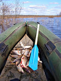 Fish in rubber boat Stock Images