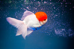 A fish's surfing. A fish is surfing in the aquarium Stock Photo
