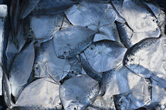 Fish for sail. Royalty Free Stock Images