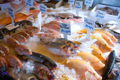 Fish for Sale. Variety of fresh fish kept in ice in a shop Stock Photography