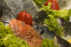 Fish for Sale. In a market on fresh lettuce leaves Royalty Free Stock Image