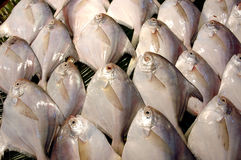 Fish for sale. Stock Photography
