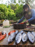 Fish for sale in Andaman Islands. Man selling fish in Andaman Islands, India Royalty Free Stock Images