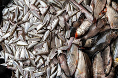 Fish for sale at asian food market Royalty Free Stock Photos