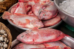 Fish for sale at asian food market Stock Photo