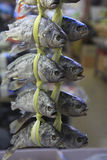 Fish for sale. In Busan Fish Market Royalty Free Stock Photos