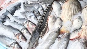 Fish for sale stock video footage