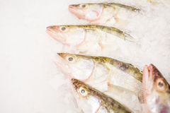 Fish for sale on ice Royalty Free Stock Image