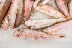 Fish for sale on ice Royalty Free Stock Photo