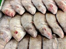 Fish for Sale. An image of fish for sale at an asian grocery store Stock Photography