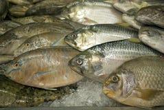 Fish for sale, Kuching, Sarawak, Malaysia Stock Photography