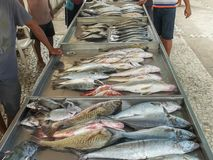 Fish for sale at a market on copacabana beach in rio royalty free stock photos