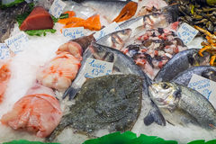 Fish for sale at a market Royalty Free Stock Photography
