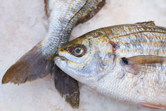 Fish for sale on market Stock Photography