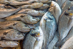 Fish for sale at the market Royalty Free Stock Photo