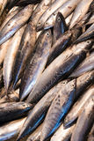Fish for sale in market. Fish for sale phtographed in Turkish town market Royalty Free Stock Images
