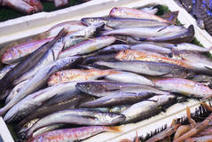 Fish for sale on a market stall Royalty Free Stock Images