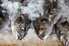Fish For Sale Packed in Ice Royalty Free Stock Photo