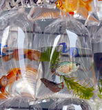 Fish for sale in plastic bags Royalty Free Stock Photos