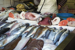 Fish on sale in Porto, Portugal. Fish on sale in a central market of Porto, Portugal Royalty Free Stock Photo