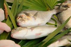 Fish sale Royalty Free Stock Image