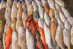 Fish sale. Seafood on ice at the fish market. Malaysia Royalty Free Stock Image