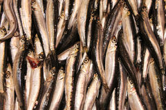Fish for sale. Stacked rows of fresh fish exposed for sale Royalty Free Stock Image