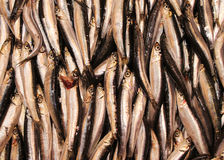 Fish for sale. Stacked rows of fresh fish exposed for sale Royalty Free Stock Images
