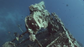 Fish in Salem Express shipwrecks underwater in Red Sea in Egypt. stock footage