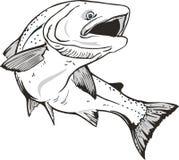 fish Salmon. King salmon fish. Hand drawn Royalty Free Stock Photo