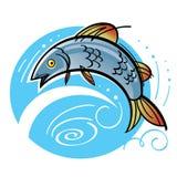 Fish salmon. Fishing jumping water river lake nature Stock Images