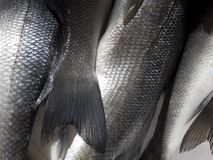 Fish scale royalty free stock photography